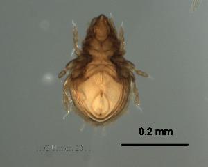 (Podopterotegaeidae - Ori17_P_1)  @11 [ ] Copyright (2011) Huijie Gan University of Michigan
