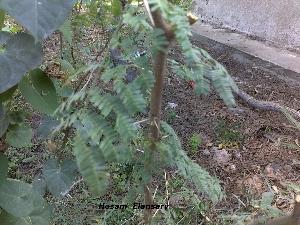 ( - Hosam00134)  @12 [ ] Copyright (2011) Dr. Hosam Elansary Alexandria University