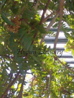 ( - Hosam00059)  @11 [ ] Copyright (2010) Dr. Hosam Elansary Alexandria University