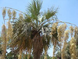 (Brahea - Hosam00053)  @11 [ ] Copyright (2010) Dr. Hosam Elansary Alexandria University