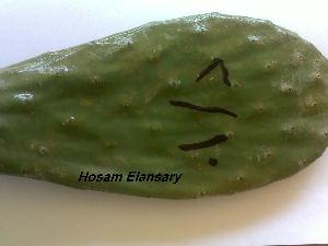 ( - Hosam00205)  @11 [ ] Copyright (2011) Dr. Hosam Elansary Alexandria University