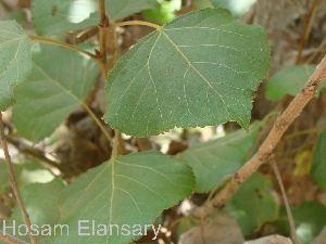 ( - Hosam00077)  @11 [ ] Copyright (2010) Dr. Hosam Elansary Alexandria University