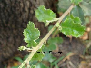 ( - Hosam00146)  @11 [ ] Copyright (2011) Dr. Hosam Elansary Alexandria University
