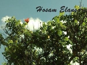 ( - Hosam00073)  @11 [ ] Copyright (2010) Dr. Hosam Elansary Alexandria University