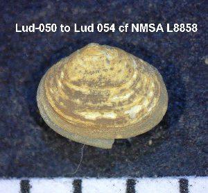 (Lasaeidae - HvdB-Lud-054)  @13 [ ] Unspecified (default): All Rights Reserved  Unspecified Unspecified