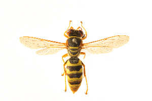 (Rubrica - CORBIDI AR-002164)  @11 [ ] Copyright (2010) CORBIDI Centro de Ornitologia y Biodiversidad