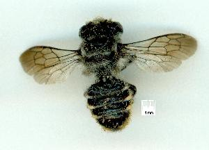 (MegachilidGC - gvc12543-1L)  @13 [ ] Copyright (2004) Unspecified Unspecified