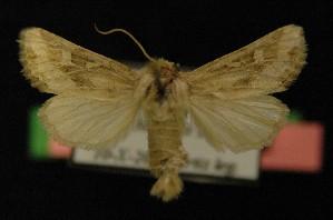 ( - AOC Lep 00162)  @11 [ ] Copyright (2014) Axel Hausmann/Bavarian State Collection of Zoology (ZSM) Universidad de Murcia