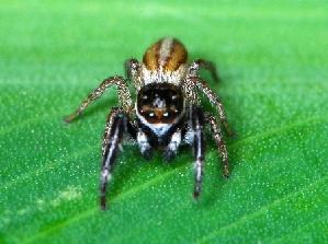 (Wedoquella - tiss0843)  @11 [ ] by-sa (2016) Rubio GD Insituto de Biología Subtropical