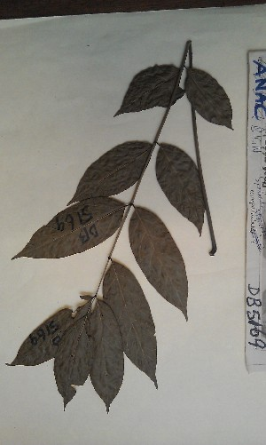 ( - FHO-DB5169)  @11 [ ] Copyright (2013) Unspecified University of Oxford, Department of Plant Sciences
