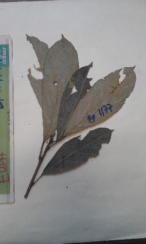 (Mareya - FHO-EP1177)  @11 [ ] Copyright (2013) Unspecified University of Oxford, Department of Plant Sciences