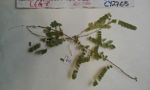 ( - FHO-CY2765)  @11 [ ] Copyright (2013) Unspecified University of Oxford, Department of Plant Sciences