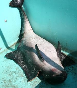 ( - pp080410)  @12 [ ] Copyright (2010) Brittany Stranding Network Oceanopolis