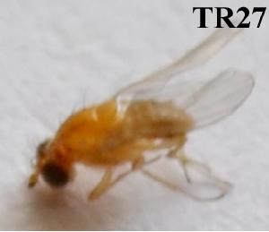 (Odontotermes gurdaspurensis - MJ27)  @12 [ ] Copyright (2013) PHCDBS Paul Hebert Centre for DNA Barcoding and Biodiversity Studies