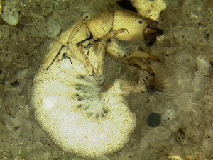 (Hydropsychidae - IQCAD-0007)  @15 [ ] Unspecified (default): All Rights Reserved  Unspecified Unspecified