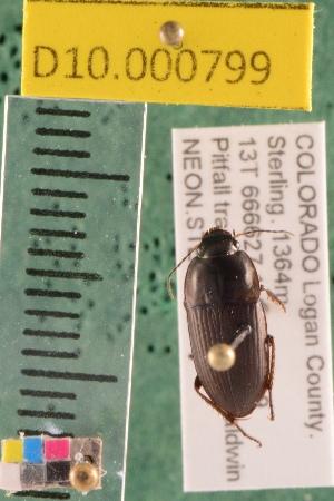 (Carabidae D10morph_D - D10.000799)  @12 [ ] Copyright (2010) National Ecological Observatory Network, Inc. National Ecological Observatory Network (NEON) http://www.neoninc.org/content/copyright