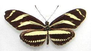 ( - WI-JAG-063)  @14 [ ] No Rights Reserved  Julio A Genaro Caribbean Natural History Group