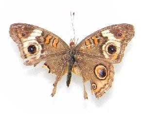 ( - WI-JAG-239)  @12 [ ] No Rights Reserved  Julio A Genaro Caribbean Natural History Group