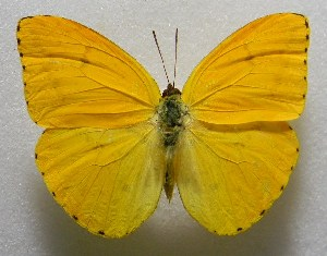 ( - WI-JAG-376)  @11 [ ] No Rights Reserved  Julio A Genaro Caribbean Natural History Group