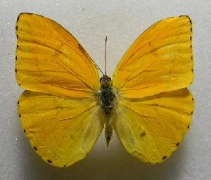 ( - WI-JAG-378)  @11 [ ] No Rights Reserved  Julio A Genaro Caribbean Natural History Group