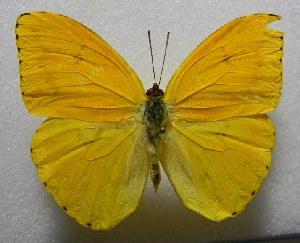 ( - WI-JAG-379)  @11 [ ] No Rights Reserved  Julio A Genaro Caribbean Natural History Group