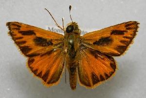 ( - WI-JAG-690)  @13 [ ] No Rights Reserved  Julio A Genaro Caribbean Natural History Group