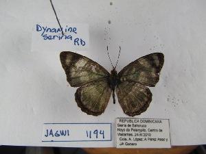 (Dynamine - Wi-JAG-1194)  @15 [ ] No Rights Reserved (2015) Julio A Genaro Caribbean Natural History Group