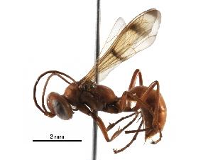 (Eragenia - BIOUG29571-F09)  @14 [ ] CreativeCommons - Attribution Non-Commercial Share-Alike (2016) BIO Photography Group Biodiversity Institute of Ontario