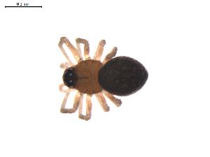 (Ceraticelus atriceps - BIOUG00635-B04)  @14 [ ] Copyright  G. Blagoev 2011 Unspecified