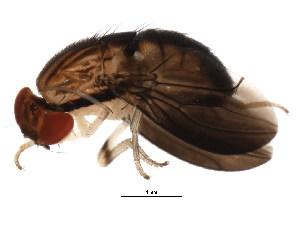 (Steganinae - BIOUG00965-H03)  @15 [ ] CreativeCommons - Attribution Non-Commercial Share-Alike (2011) BIO Photography Group Biodiversity Institute of Ontario