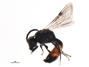 (ichJanzen01 - BIOUG01253-C12)  @11 [ ] CreativeCommons - Attribution Non-Commercial Share-Alike (2011) BIO Photography Group Biodiversity Institute of Ontario