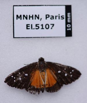 (Echenais - EL5107)  @11 [ ] Creative Commons (2015) Rodolphe Rougerie Muséum national d'Histoire Naturelle, Paris