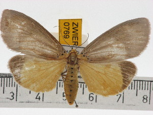(Aganainae - ZWIER DNA 0769)  @16 [ ] Copyright (2010) Unspecified Research Collection of Jaap Zwier
