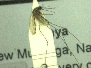 ( - NRB 1318)  @12 [ ] Copyright (2011) NMK National Museums of Kenya