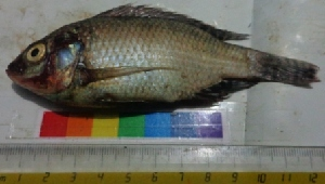 ( - TUK12)  @11 [ ] Copyright (2014) PHCDBS Paul Hebert Centre For DNA Barcoding And Biodiversity Studies
