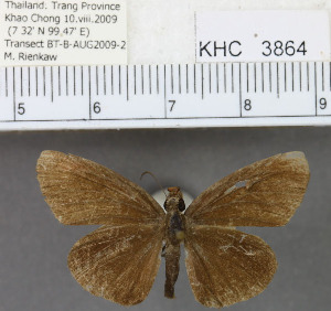 (Hesperinae - YB-KHC3864)  @14 [ ] No Rights Reserved  Unspecified Unspecified