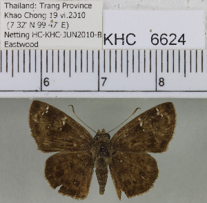 (Hesperiidae_unassigned - YB-KHC6624)  @14 [ ] No Rights Reserved  Unspecified Unspecified