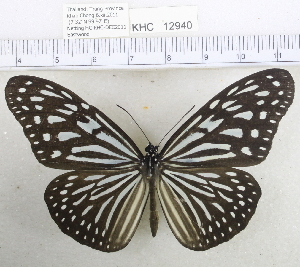 (Ideopsis - YB-KHC12940)  @14 [ ] Unspecified (default): All Rights Reserved  Unspecified Unspecified