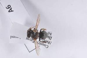 (Apis mellifera carnioliana - ApmecaA06)  @12 [ ] Copyright (2011) Fabian Haas icipe