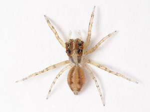 (Euryattus - NMF2012-01399.PK171)  @15 [ ] CreativeCommons Attribution Non-Commercial Share-Alike (2012) Unspecified Natuurmuseum Fryslân