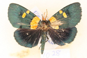 (Egybolis - MSA 1028)  @15 [ ] Copyright (2011) NMK National Museums of Kenya