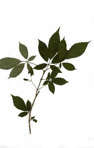 (Vitex - RBN141.1)  @11 [ ] Copyright  Unspecified Unspecified