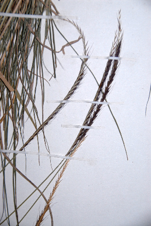 (Enteropogon - KNP150)  @11 [ ] Unspecified (default): All Rights Reserved  Unspecified Unspecified