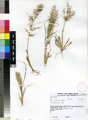 (Diandrochloa - PRE191)  @11 [ ] Unspecified (default): All Rights Reserved  Unspecified Unspecified