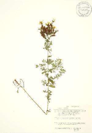 ( - KSR 011)  @11 [ ] Copyright (2009) Steven Newmaster University of Guelph BIO Herbarium