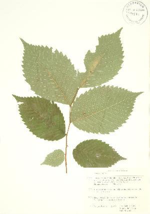 ( - KSRB 031)  @11 [ ] Copyright (2009) Steven Newmaster University of Guelph BIO Herbarium