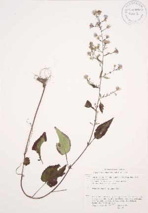 ( - AP339)  @11 [ ] Copyright (2009) Steven Newmaster University of Guelph BIO Herbarium