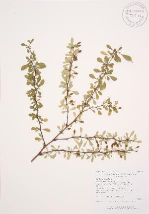 ( - AP304)  @11 [ ] Copyright (2009) Steven Newmaster University of Guelph BIO Herbarium