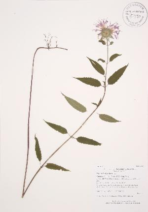 ( - AP211)  @11 [ ] Copyright (2009) Unspecified University of Guelph BIO Herbarium