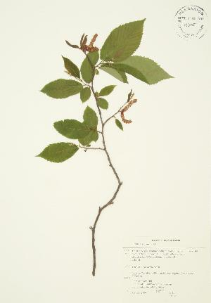 ( - AP045)  @11 [ ] Copyright (2009) Steven Newmaster University of Guelph BIO Herbarium